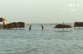 المياه الآسنة تقضي تدريجيا على أكبر بحيرات باكستان