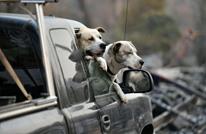 الكلاب يمكن أن تشم رائحة سرطان الرئة بدقة تصل إلى 97%