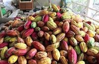 فيتنام تخوض غمار صناعة الشوكولا الفاخرة (فيديو)