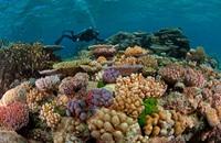 ضغوطات على أستراليا لحماية الحاجز المرجاني العظيم