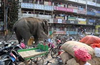 فيل هائج يدمر عشرات البيوت والسيارات بإحدى قرى الهند (فيديو)
