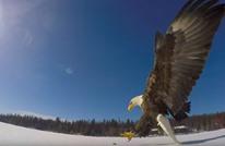 صور مثيرة لنسر أمريكي يلتقط سمكة من بحيرة متجمدة (فيديو)