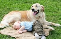 دراسة: الكلاب يمكنها استشعار أحاسيس البشر