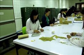 """خرق علمي في تحديد التركيبة الوراثية للأرز قد يطلق """"ثورة خضراء"""""""