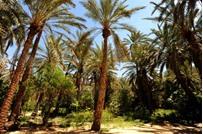 """السجن لتونسي قطع شجرة """"كينا"""" في قرطاج"""