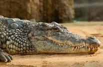تمساح يتسبب بمقتل ضابط بشرطة البيئة في الأردن
