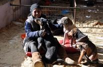 معلمة تركية تستقيل للاعتناء بـ400 كلب (صور)