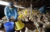 الصين تعلن رصد سلالة أخطر من فيروس إنفلونزا الطيور