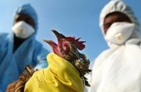 سلالة شديدة العدوى من إنفلونزا الطيور بمصر وإسبانيا والصين