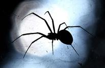 علماء يترجمون شبكة بيت العنكبوت لموسيقى بهدف مخاطبته