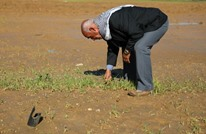 MEE: لماذا تشن إسرائيل حربا متعمدة على الزراعة في غزة؟