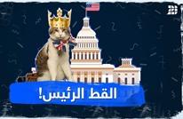 القط الرئيس!