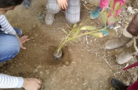مشروع تطوعي بيئي في الأردن لغرس فسائل الأشجار