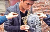 قبلة لسلحفاء قطعت شفاه رجل صيني