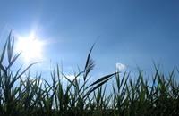 2013 السادس بين أكثر الأعوام ارتفاعا للحرارة
