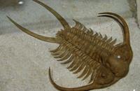 اكتشاف كائنات عملاقة وديعة تمثل أصل المفصليات الحديثة