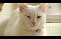 لبنانية تحول منزلها إلى دار رعاية لحيوانات الشوارع (فيديو)