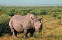 فك شيفرة لغز ثدييات اكتشفها داروين في أمريكا الجنوبية