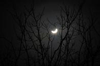 """العالم يتابع الشمس """"المكسوفة"""" بنهار الجمعة المظلم (صور)"""