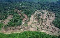 منظمة: العالم خسر في ربع قرن غابات بمساحة جنوب أفريقيا