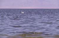 كبرى البحيرات في كاليفورنيا على وشك التبخر (فيديو)