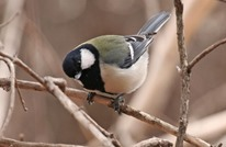 إندبندنت: دراسة علمية تكشف قدرة الطيور على الكلام