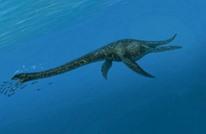 """بيع ذيل ديناصور  """"مغربي"""" بمزاد لصالح مشروع إعمار في المكسيك"""