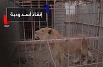 هذه قصة معاناة أسد ودبة في حديقة بسبب معارك الموصل