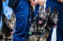 المونيتور: الكونغرس يسأل الخارجية عن كلاب ماتت بالأردن