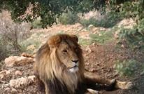 تعرف إلى قصص حيوانات لجأت من جحيم الحرب للأردن (شاهد)