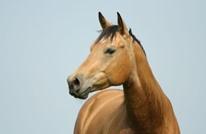 حوادث غامضة لتشويه الخيول بطريقة غريبة تشغل فرنسا
