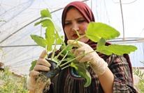 الزراعة المائية بفلسطين.. تجربة ناجحة رغم المعيقات (شاهد)