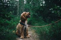 كلب يلازم قبر أصحابه منذ 15 عاما.. تعرف على قصته