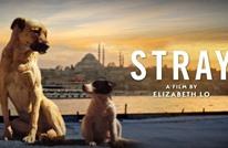 كلاب إسطنبول الضالة تلعب دور البطولة في فيلم وثائقي