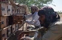 اليمن: مربو النحل ينتجون أجود أنواع العسل برغم الحرب