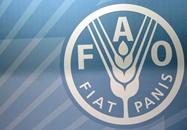 الفاو: أسعار الأغذية العالمية تواصل تراجعها