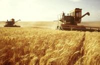 المغرب يتوقع إنتاج 6.7 مليون طن من الحبوب