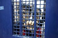 """أسيران يطعنان شرطيين إسرائيليين بسجني """"نفحة"""" و""""النقب"""""""