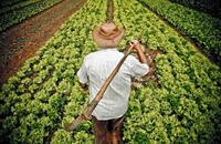 فاو: أسعار الغذاء العالمية تقفز مجددا في مارس