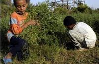 منتدى الأعمال الدولي يحذر من استغلال المستوطنين لأطفال فلسطين