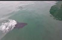 سمكة ضخمة تبتلع نورسا أراد سرقة طعامها (فيديو)