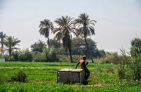 مصر تحظر زراعة بعض المحاصيل مع تفاقم أزمة سد النهضة