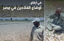 بالأرقام.. تعرف على أوضاع الفلاحين في مصر (إنفوغرافيك)