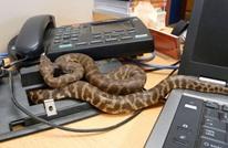 رئيس ليبيريا يخلي مكتبه ويعمل من المنزل بسبب الثعابين