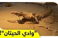 """وادي الحيتان.. """"سحر"""" يحكي قصة ملايين السنين بمصر"""