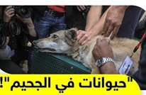 الحيوانات في غزة لم تسلم من الحصار والحرب.. كيف سيتم إنقاذها؟