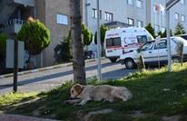 قصة كلب وفيّ لصاحبه المريض بكورونا في مشفى تركي (فيديو)