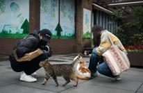 قط مصاب بكورونا بهونغ كونغ.. والصحة العالمية تطمئن