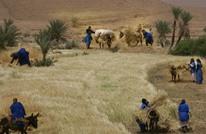 المغرب يفقد 42 بالمئة من إنتاج الحبوب في 2020 لضعف الأمطار