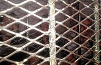 قضاة اليمن يرفعون إضرابهم والمحاكم تعود للعمل